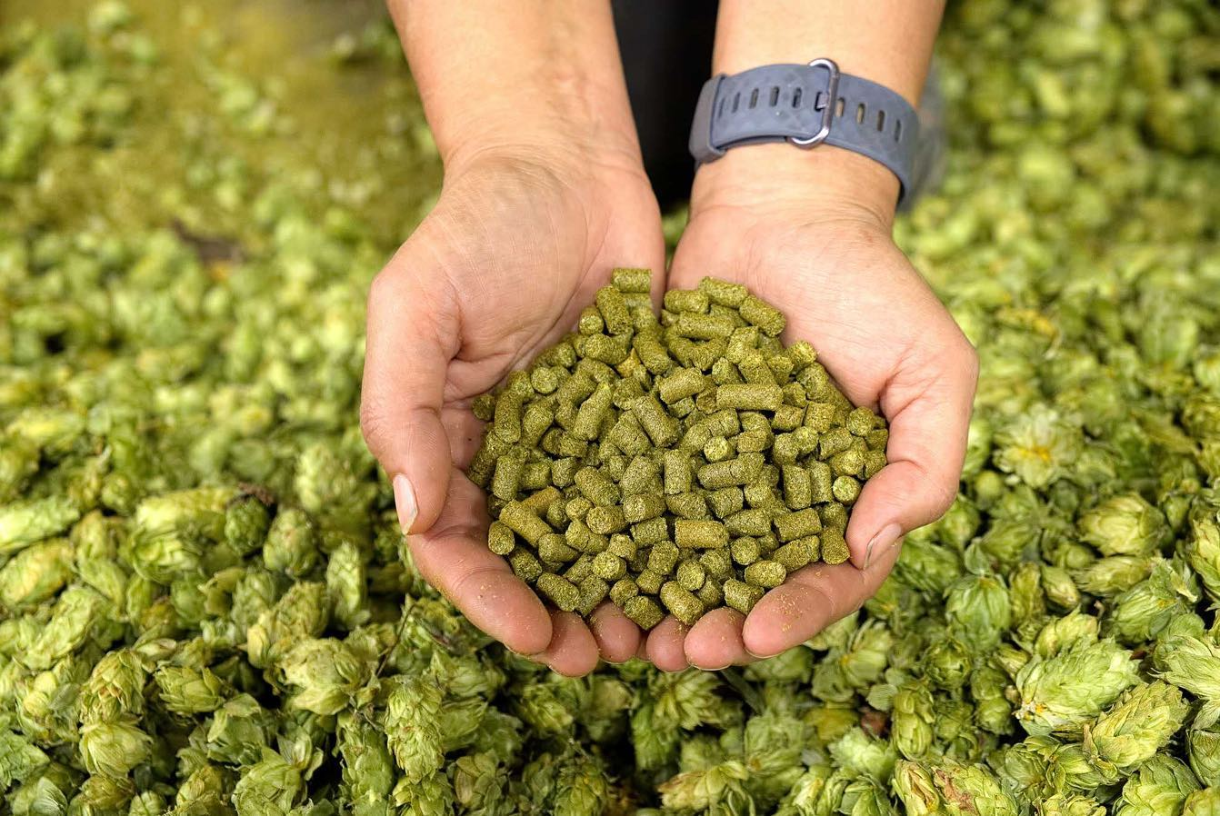 What Are Brewers' Favorite Hops in 2020?
